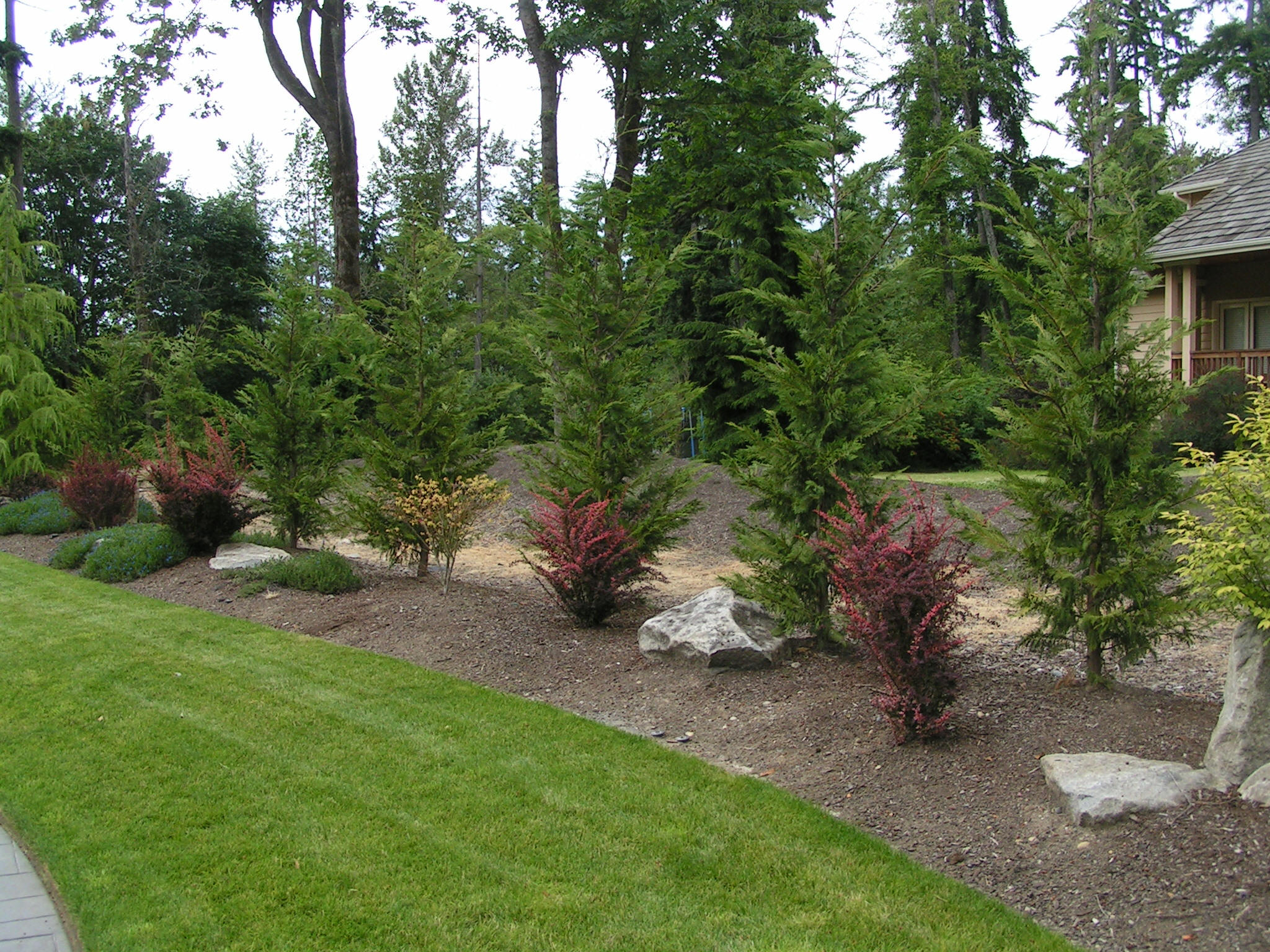 Photo gallery for Trees for privacy small garden