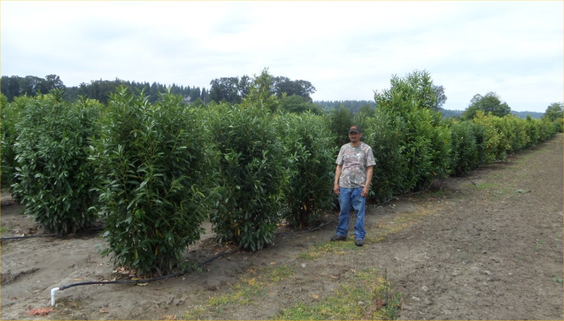 Top 10 Privacy Trees In Washington State