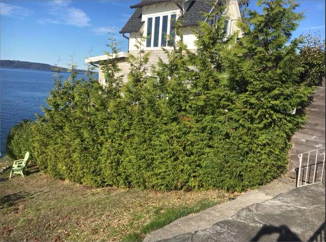 Top 10 Privacy Trees in Washington State Trees To Plant Close House on www.tree house, trees next to foundation, small tree next to house, small hedge next to house, trees in redmond, trees lake house, trees to plant next to house,