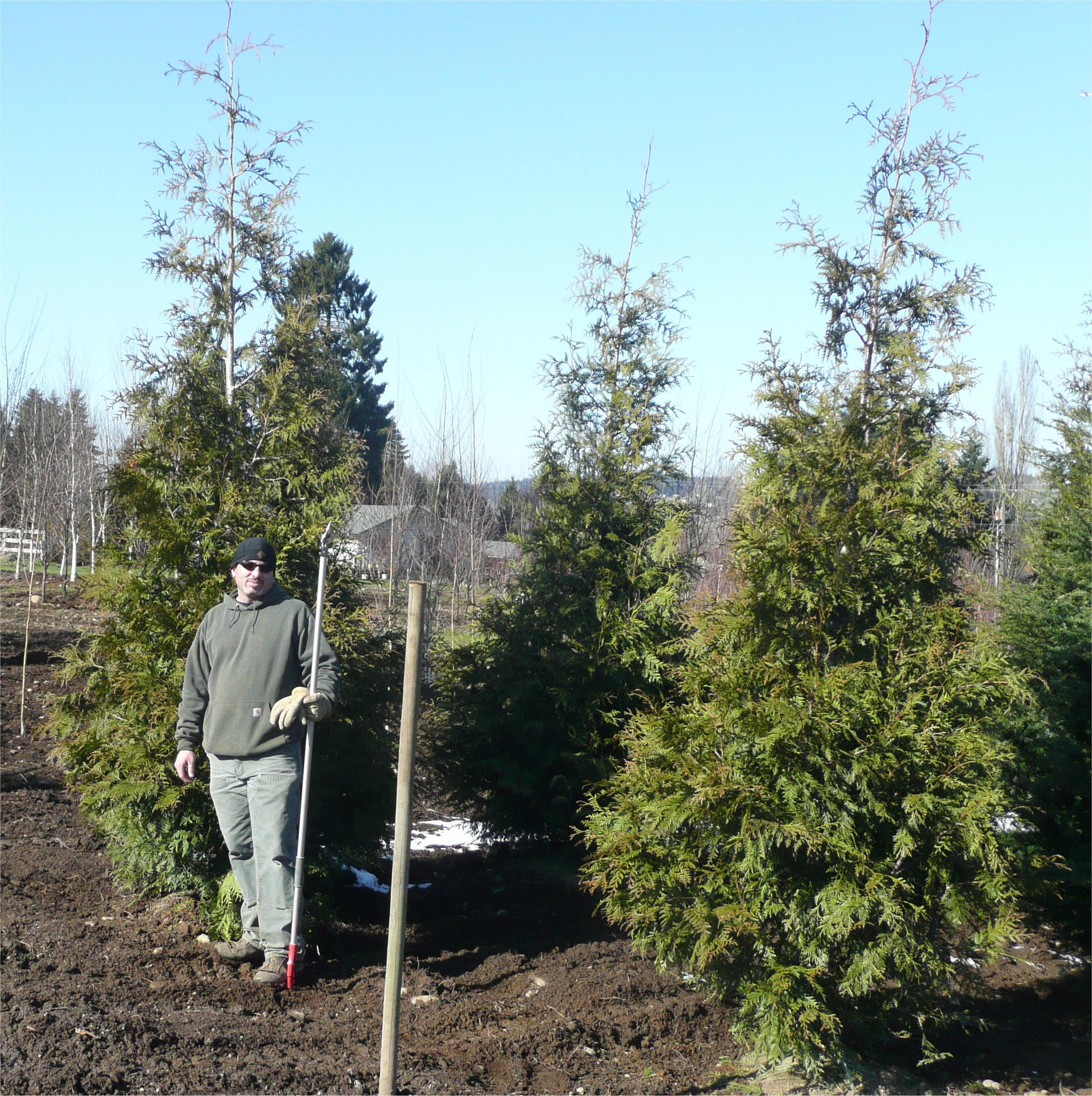 Western Red Cedar Available In Washington State
